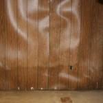 mold from rain damage