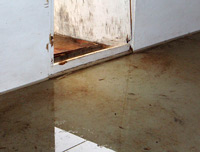Water Removal and Mold
