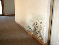 mold on apartment wall
