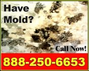 Call 888-250-6653 for a free on-site mold inspection in <?php echo